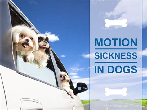 puppy motion sickness the pet professionals