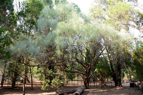 Botanic Gardens And Parks Authority Botanic Gardens And Parks Authority April 2015
