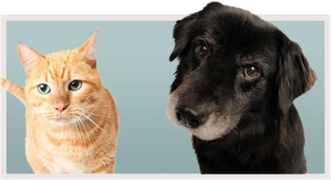 when is a considered a senior senior pet care how do my pet s needs change