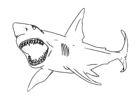 Jaws Coloring Pages jaws coloring pages related keywords jaws coloring pages