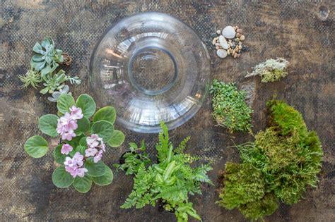 best plants for self contained terrarium terrarium plants choosing the best plants for your terrarium hgtv
