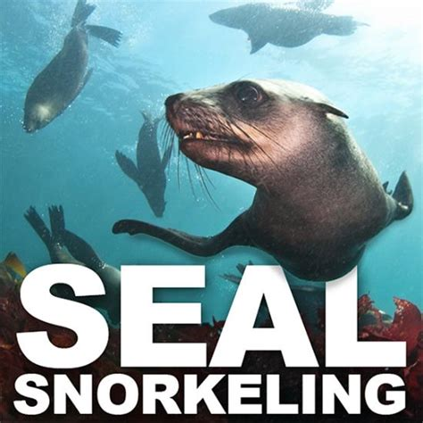 Kaos Awesome Animal 13 Tx Oceanseven animal seal snorkeling hout bay south africa top tips before you go with photos