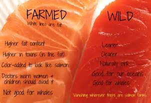 farm raised salmon color farmed salmon viruses explained smart health talk
