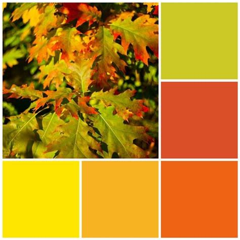 fall color schemes fall leaves color scheme for the home