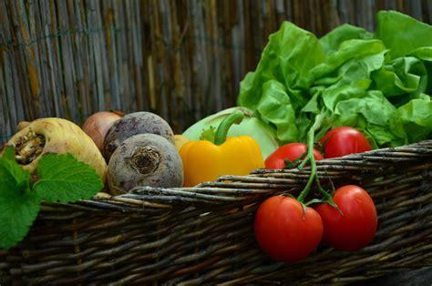 vegana alimentazione alimentazione vegana cosa comprende e cosa esclude