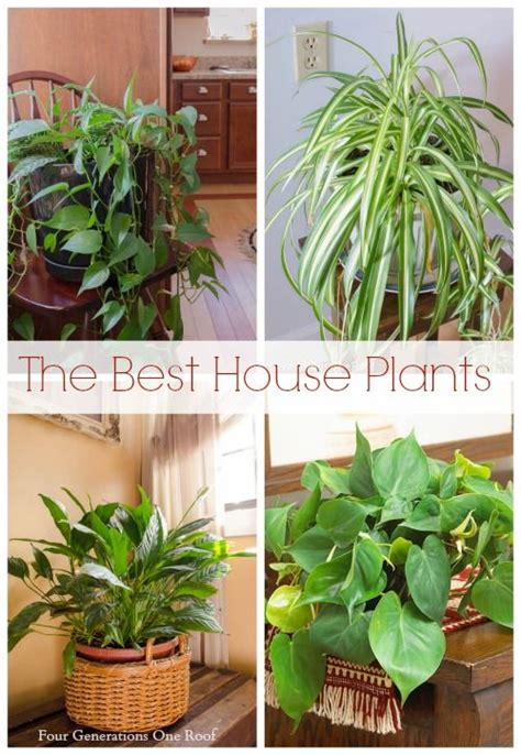 typical house plants the most common house plants my mom s love for her plants four generations one roof