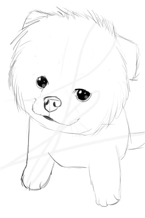 boo dog coloring page boo the cutest dog in the world by sparkle butt on deviantart