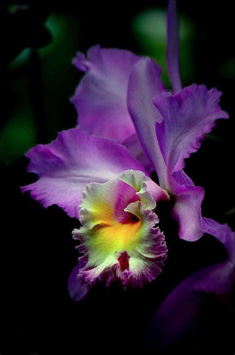garden orchids and roses auf pinterest orchideen dfte 1526 besten flowers fleurs bilder auf pinterest sch 246 ne