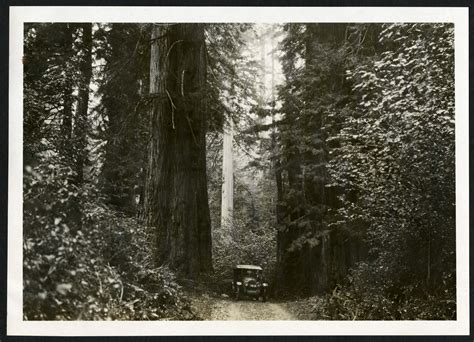 Humboldt County Records Science Service Up Save The Redwoods