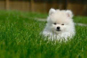 Pin puppy 1080p hd backgrounds wallpaper desktop cake on pinterest