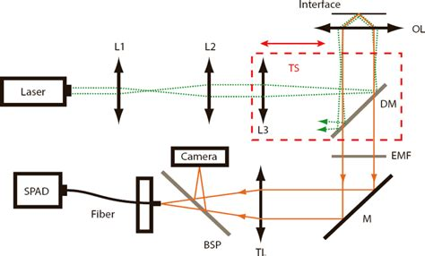 single photon avalanche diode lifier ijms free text electrostatic interactions of fluorescent molecules with dielectric