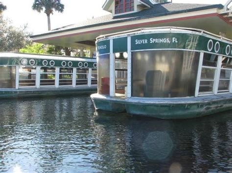 glass bottom boat tours pensacola fl old cypress tree picture of silver springs state park