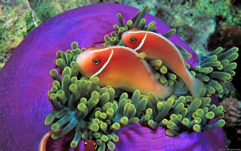 colorful fish most beautiful colorful fish hd pictures collection