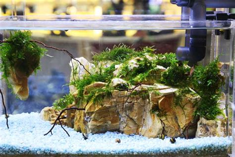 aquascape air laut mini aquascape goes to mall 2014 bebeja