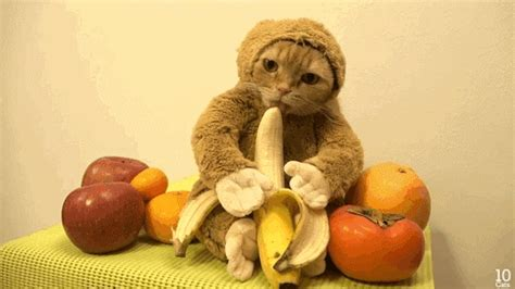 new year monkey gif on february 8 the new year inagurates the year of