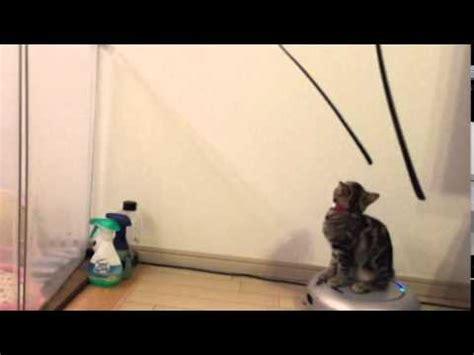 Vacuum Cleaner Sora cat a vacuum cleaner he name sora