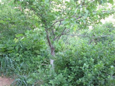 Forest Evening Mba Schedule by Edible Forest Gardens And Commercial Food Forestry An