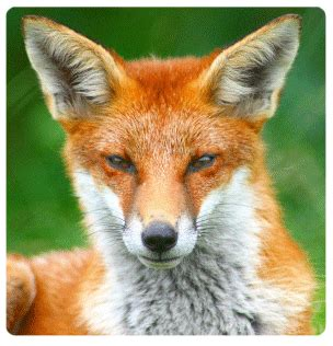 Sq Ft Foxwatch Electronic Fox Deterrent