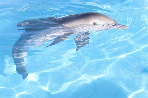 imagenes reales de winter el delfin foto la gran aventura de winter el delf 237 n 30 cinedor