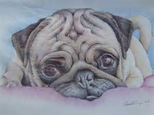 Art albums biro drawings picture16739 drawing pug d done coloured
