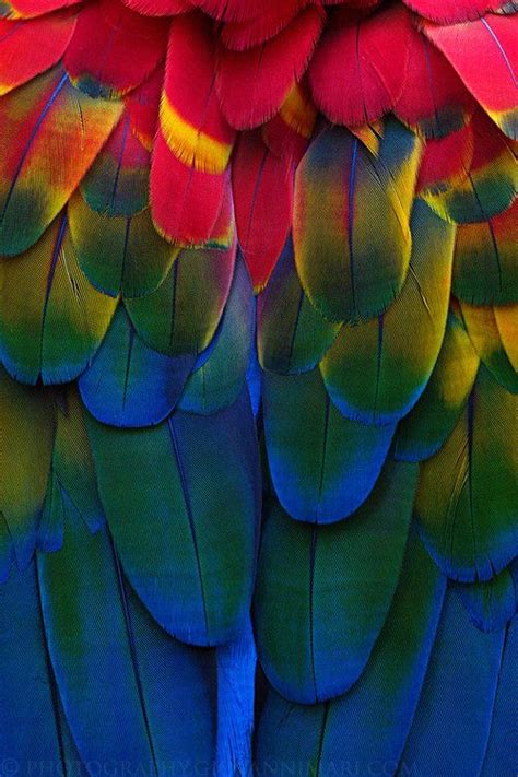 the adventures of osumare with the rainbow feathered hair asp publishing presents books 17 best images about photography feathers beautiful