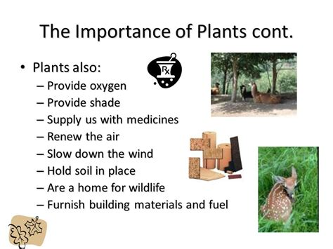 Part 3 Economic Importance Of The Home Based Business Importance Of Plant Home Design