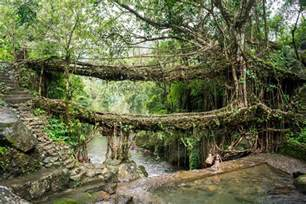 what is root bridge nongriat and the living root bridges of meghalaya lost with purpose