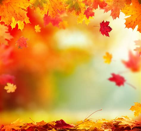 Get Ready For Autumn Fall Get Your Home Ready For Fall Nc State Extension