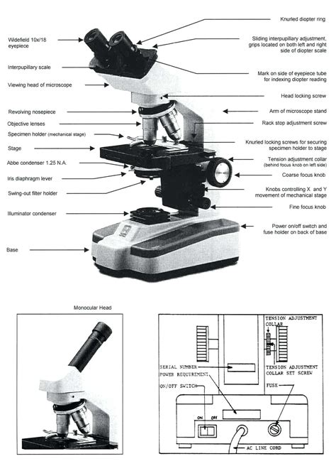 compound light microscope parts and functions compound light microscope parts and functions worksheet
