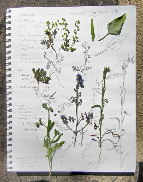 botanical sketchbook inspiration and best 25 sketches of nature ideas on fashion design drawings fashion illustration