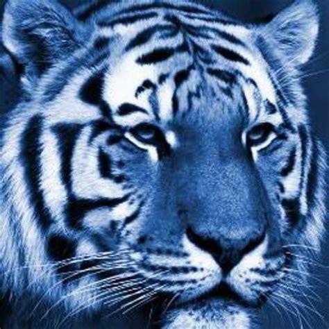 Blue Tiger blue tiger bluetiger888