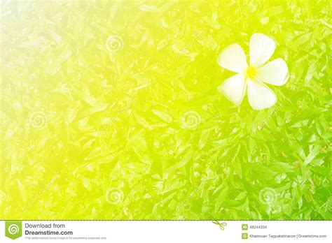 Soft Bordir Flower 2 nature and flower abstract soft background stock photo