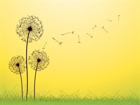 themes for powerpoint 2007 nature dandelion black and white template google search