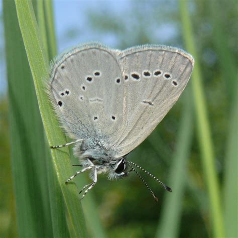 Small Blue small blue