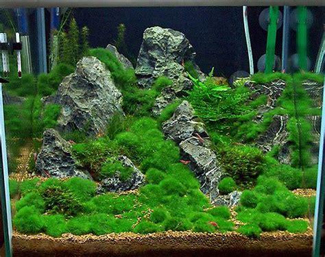 aquascaping shop die besten 25 garnelen aquarium ideen auf pinterest garnelen im aquarium betta