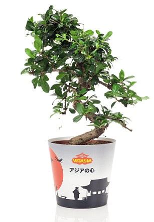 Instant Bonsai Just Remove Genes by From Succulent Pulled Pork With And Chilli To Thai