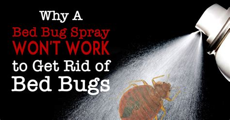 bed bug spray wont work   rid  bed bugs