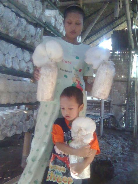 Bibit Jamur Tiram Warna jamur tiram medan tanjung morawa pusat pelatihan