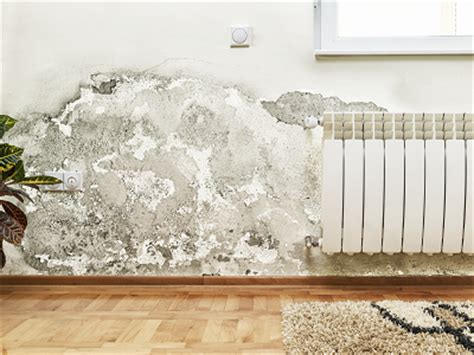 will house insurance cover mold what doesn t homeowners insurance cover