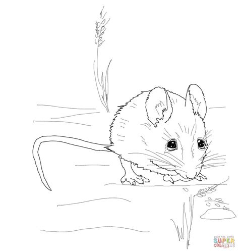 cute mouse coloring pages cute wood mouse coloring page free printable coloring pages