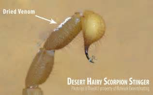 Bed Bug Poison Scorpion Anti Venom Now Approved By Fda Prevent Scorpion