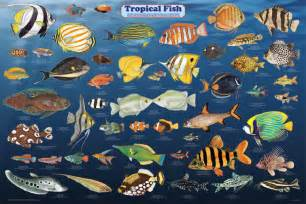 types of aquarium fish what is your favorite tropical fish