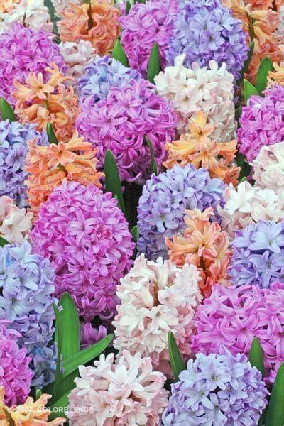 fiori primaverili fiori primaverili