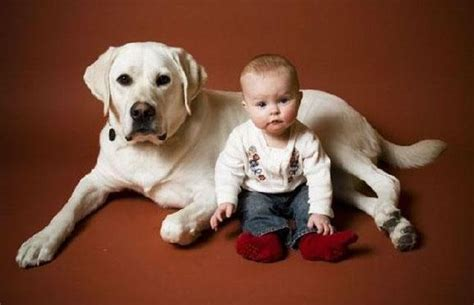 babies and dogs babies speak