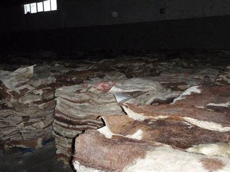 Selling Cow Hides Sell Salted Skin Hides Salted