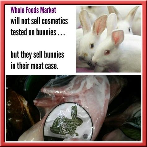 Best Seller Rabbit Top Bl4869 100 best images about whole foods selling bunny rabbit on the bunny pets
