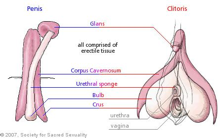 where is the clitorus diagram am i the only one