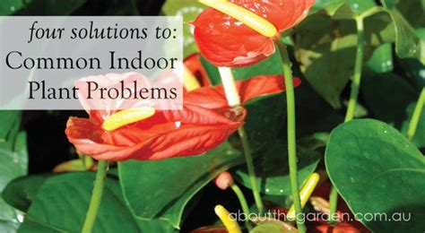 solutions  common indoor plant problemsabout