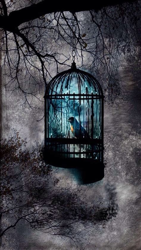beautiful bird cage and aqua 17 best images about splash of color on cell