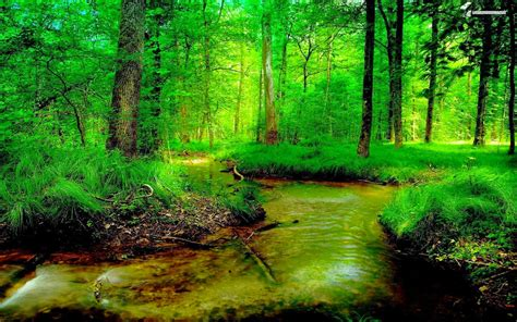 wallpaper green nature hd full hd widescreen natural nature backgrounds images